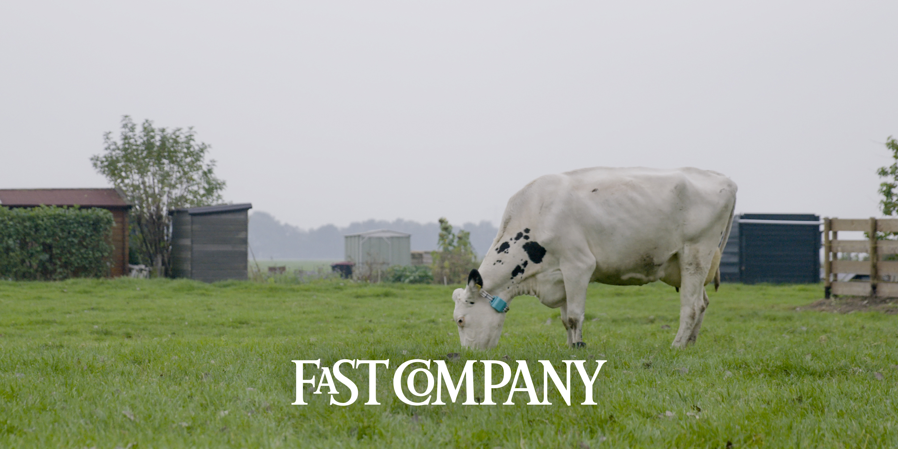 Fast Company: recognising patterns in cows connecterra