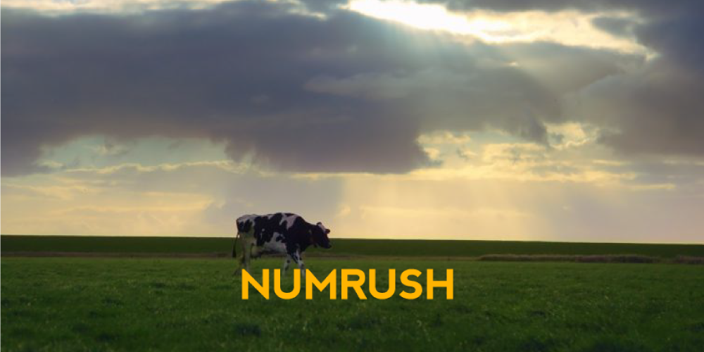 numrush podcast talks AI for dairy industry with Connecterra