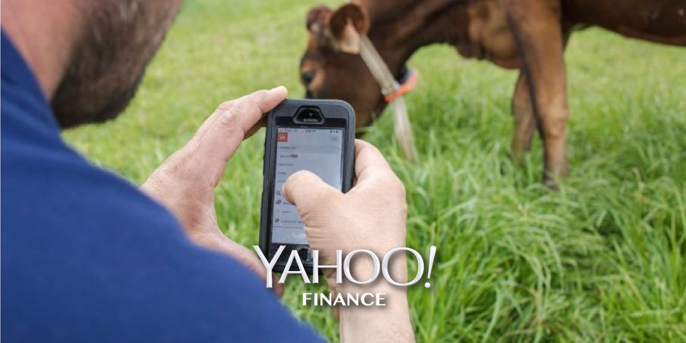 yahoo-finance-ai-for-cows